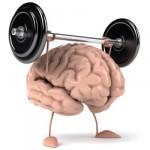 FELITIA Cerebro en forma